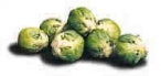 brussels_sprouts_shaded_146x69 (1)