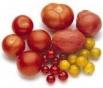 tomatoes2_103x88